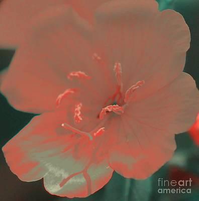 Peach Silk Poster by Kathleen Struckle