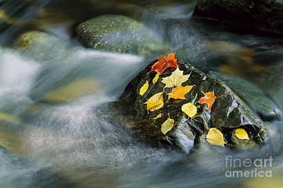 Poster featuring the photograph Peacham Brook In Fall by Alan L Graham