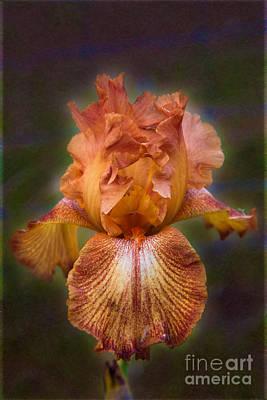 Peachy Perfect Iris Garden Art By Omaste Witkowski Poster by Omaste Witkowski