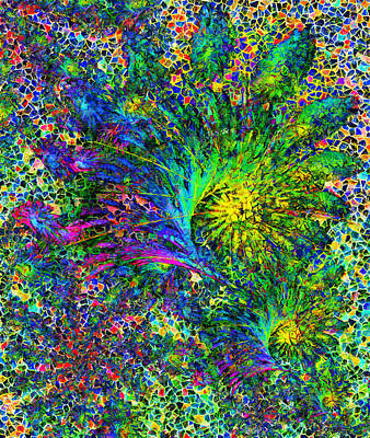 Peacock Feather Abstract Poster