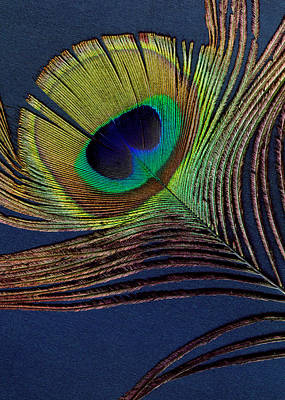 Peacock Feather Poster by Ann Powell