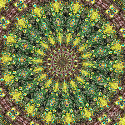 Peacock Feathers Kaleidoscope 3 Poster by Rose Santuci-Sofranko