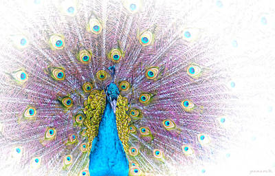 Poster featuring the photograph Peacock by Holly Kempe
