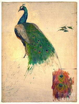 Peacock Study 1896 Poster by Padre Art