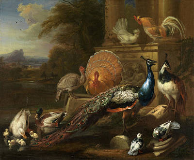 Peacocks, Doves, Turkeys, Chickens And Ducks By A Classical Poster