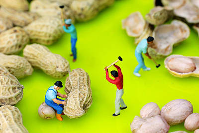Peanut Workers Little People On Food Poster by Paul Ge