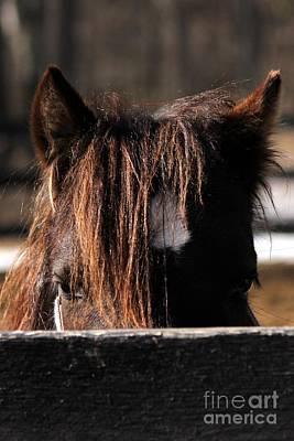 Peek-a-boo Pony Poster