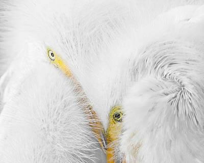 Peering Thru Feathers Poster