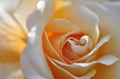 Pegasus Rose  Poster by Sabine Edrissi