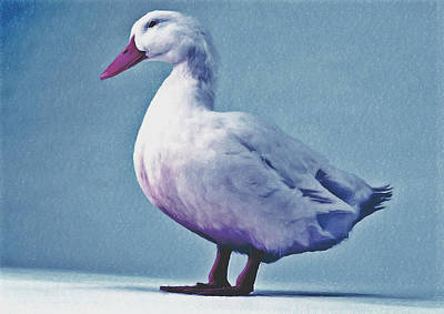 Pekin Ducks 2 Poster by Lanjee Chee