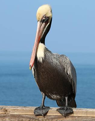 Pelican - 3  Poster