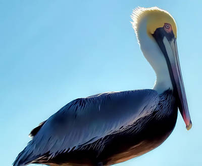 Poster featuring the photograph Pelican 1 by Dawn Eshelman