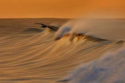 Poster featuring the photograph Pelican And Wave  Mg_6950 by David Orias