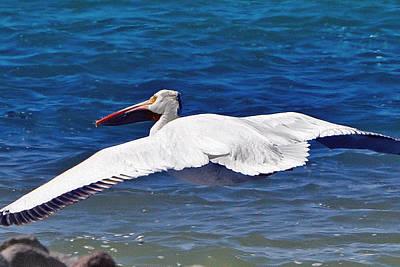 Pelican At Pyramid Lake Poster