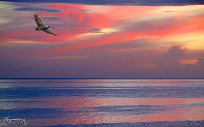 Pelican At Sunset Poster by Mariarosa Rockefeller