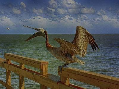 Pelican Eating Poster