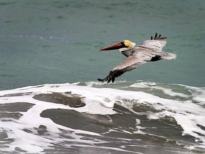 Pelican Flying Poster
