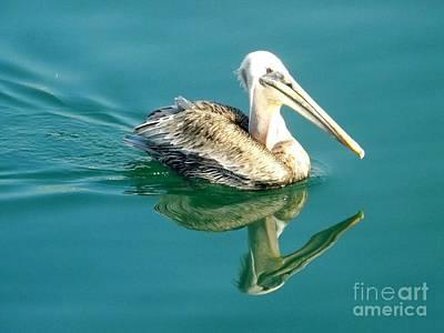 Pelican In San Francisco Bay Poster by Clare Bevan