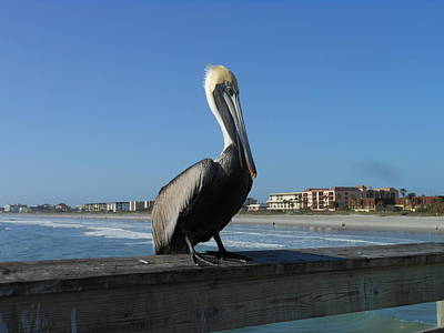 Poster featuring the photograph Pelican  by Kay Gilley