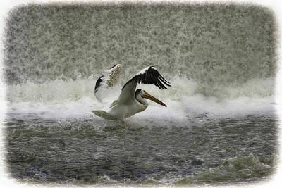 Pelican Landing In Color Poster