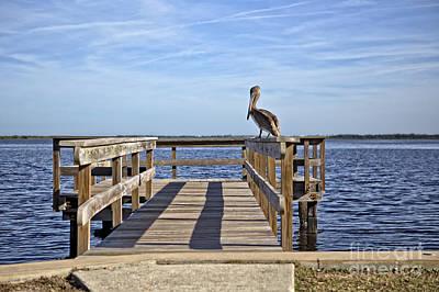 Pelican Meditation Poster by Richard Burr