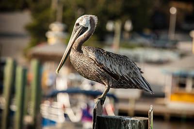 Pelican On A Pole Poster by Paul Bartoszek