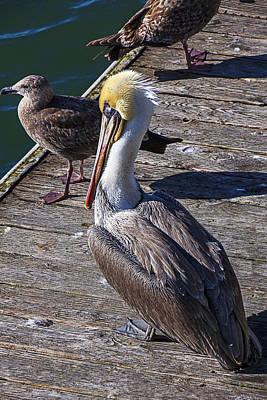 Pelican On Dock Poster