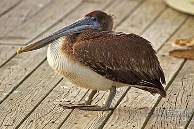 Pelican On The Dock II Poster
