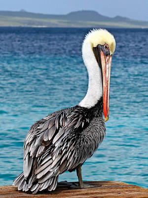 Pelican Portrait Poster by Jean Noren