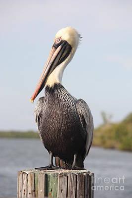 Pelican Pose Poster by Carol Groenen