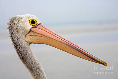 Pelican Profile Poster by Mike  Dawson