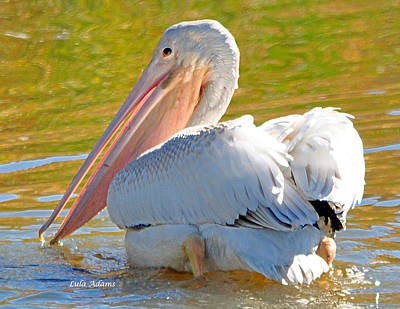 Pelican Sees Me Poster
