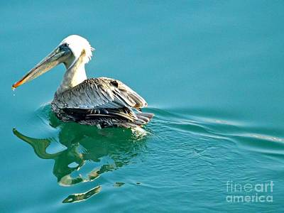 Pelican Swimming Poster by Clare Bevan