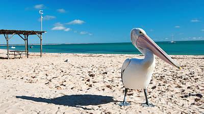 Pelican Under Blue Sky Poster