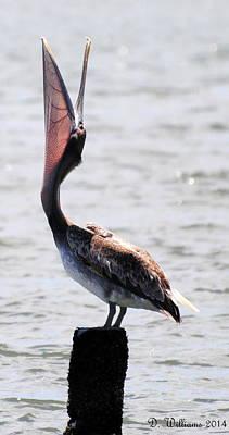 Pelican Yawn Poster