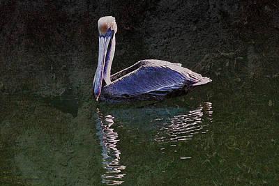 Pelican Zen Poster