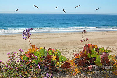 Pelicans And Flowers On Pismo Beach Poster by Debra Thompson