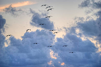 Pelicans In The Clouds Poster
