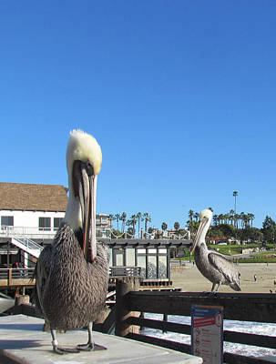 Pelicans On Pier Poster by Bonnie Muir