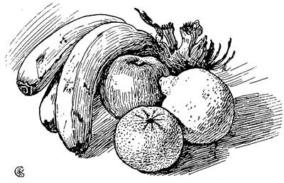 Pen Drawing Of Fruit Poster by