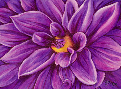 Pencil Dahlia Poster by Janice Dunbar