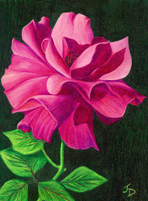 Pencil Rose Poster by Janice Dunbar