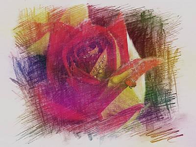 Penciled Rose Sketch Poster