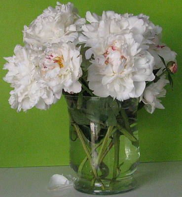 Poster featuring the photograph Peonies 2 by Margaret Newcomb