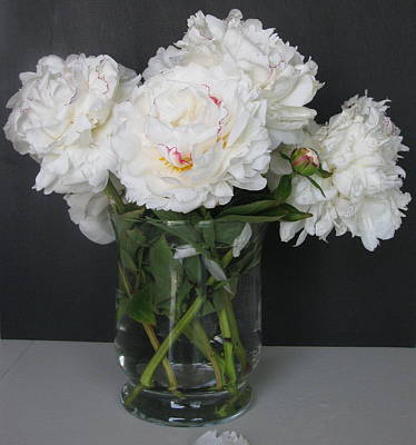 Poster featuring the photograph Peonies Bouquet 6 by Margaret Newcomb