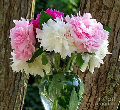 Peonies Poster by France Laliberte