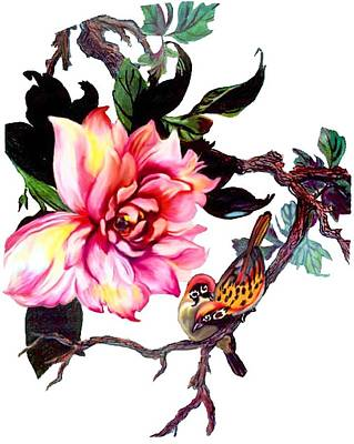 Peony And Birds Poster