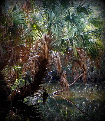 Pepper Creek Palm Poster by Sheri McLeroy