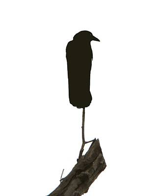 Perched Poster by Gothicrow Images