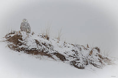 Perched Snow Owl Poster